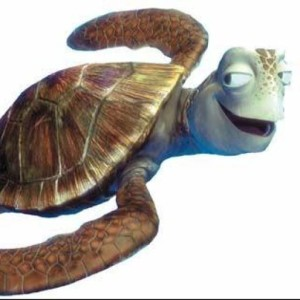 Profile picture of turtle